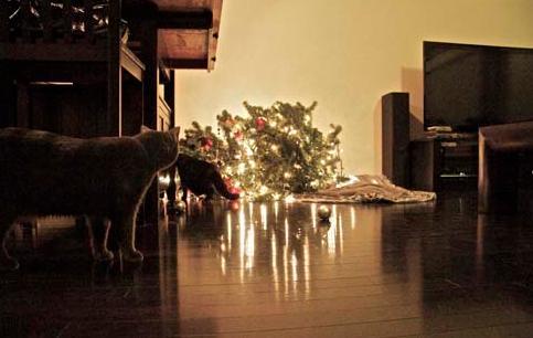 cats-vs-christmas-tree