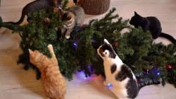 17 Vánočních stromků, které se snažily napadnout kočku!