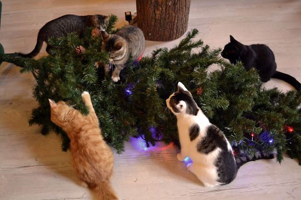 decorating-cats-destroying-trees-christmas-73__605
