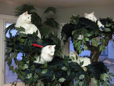 Velký volný kočička tumblr
