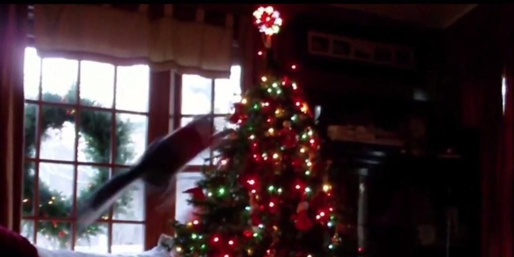 o-CATS-VS-TREES-facebook
