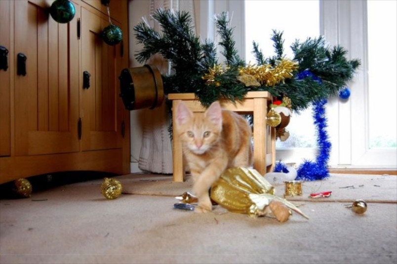 pets-Christmas-tre_2951488k