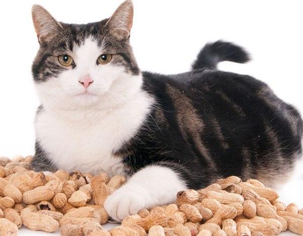Zdroj: http://www.catster.com/wp-content/uploads/2015/06/can-cats-eat-peanut-butter-02.jpg