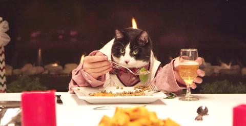 Zdroj: http://cdn.firstwefeast.com/assets/2014/12/freshpet-feast-cat-host.png