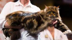 6 důvodů, proč vystavovat kočku na propagační výstavě v hotelu Diplomat