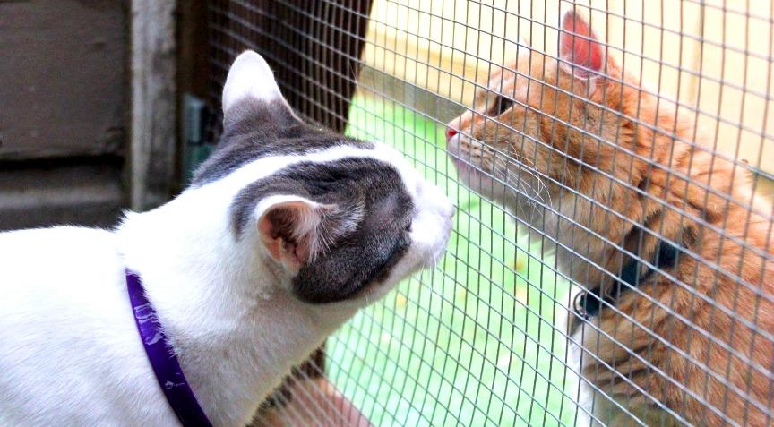 adopt a pet screen-door-closed-for-intros-upraveno