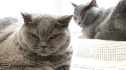 12 pravidel, jak seznámit dvě kočky