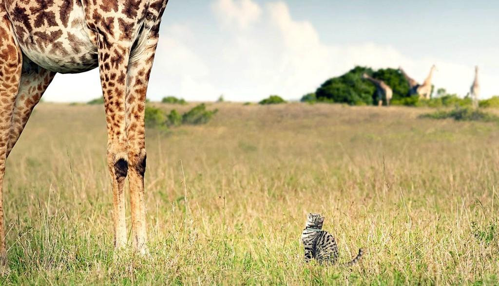 Zdroj fota: http://3.bp.blogspot.com/-YJ7meUqzCKo/UV7zbaw0muI/AAAAAAAAASo/nzCVL4F5-ig/s1600/whiskas_giraffe_observing.jpg