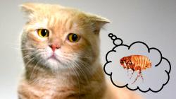 Moje kočka blechy určitě nedostane. Ale co když ano? A co s tím?