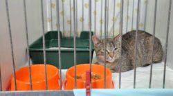 Jak pomoci kočičím útulkům?