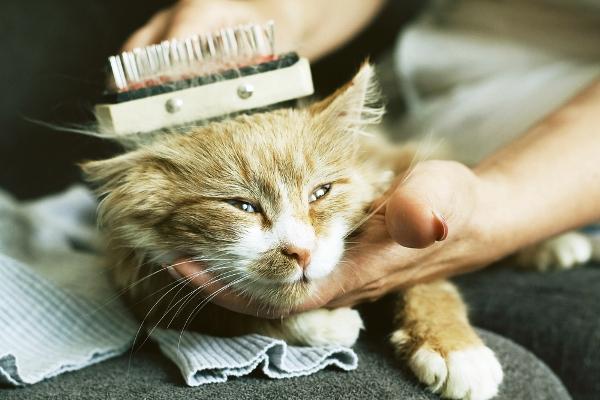 Zdroj: http://www.catster.com/wp-content/uploads/2015/06/cat-combed-shutterstock_59910760.jpg
