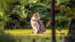 Kočka v létě na vodítku