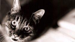 Co si o nás naše kočky doopravdy myslí?