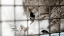 7 důvodů, proč nedávat kočku do kočičího hotelu/ ke známému
