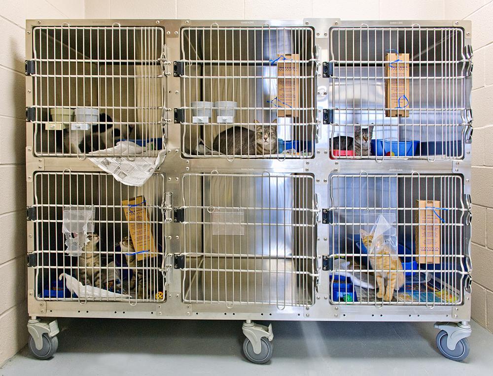 cat-cages