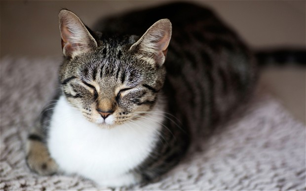 cat-purs_2695350b