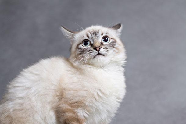 scared-cat (1)
