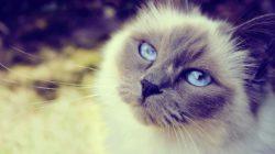 Kočičí chůva o osudovém kocourovi..