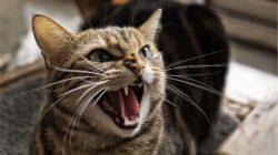Jak vpravit tabletku do vzdorující kočky – aneb nic není nemožné!