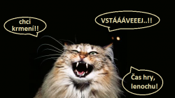 KOČIČÍ DISCIPLÍNA: Jak odnaučit kočku budit vás v noci – ve 3 bodech