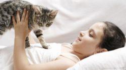 KOČKA PROTI SAMOTĚ, aneb dokáže kočka nahradit člověka?