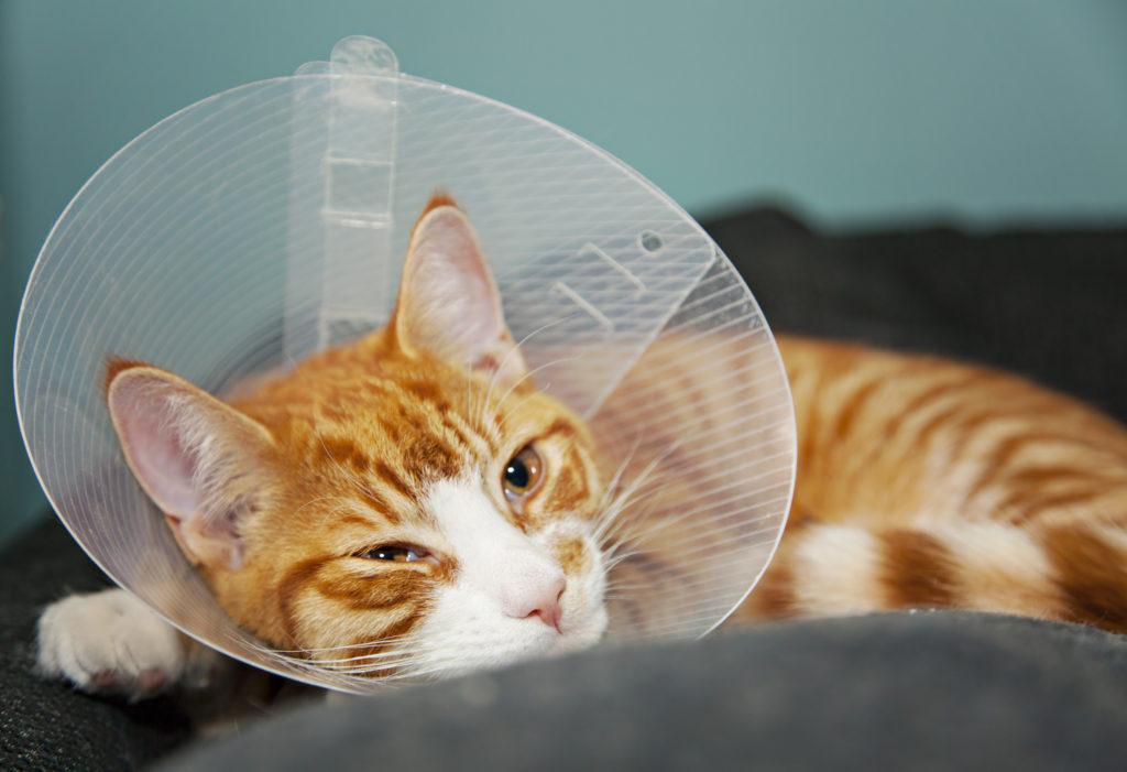 cat-with-collar