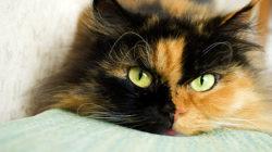 Kastrace koček – ano či ne? A kdy je správná doba?