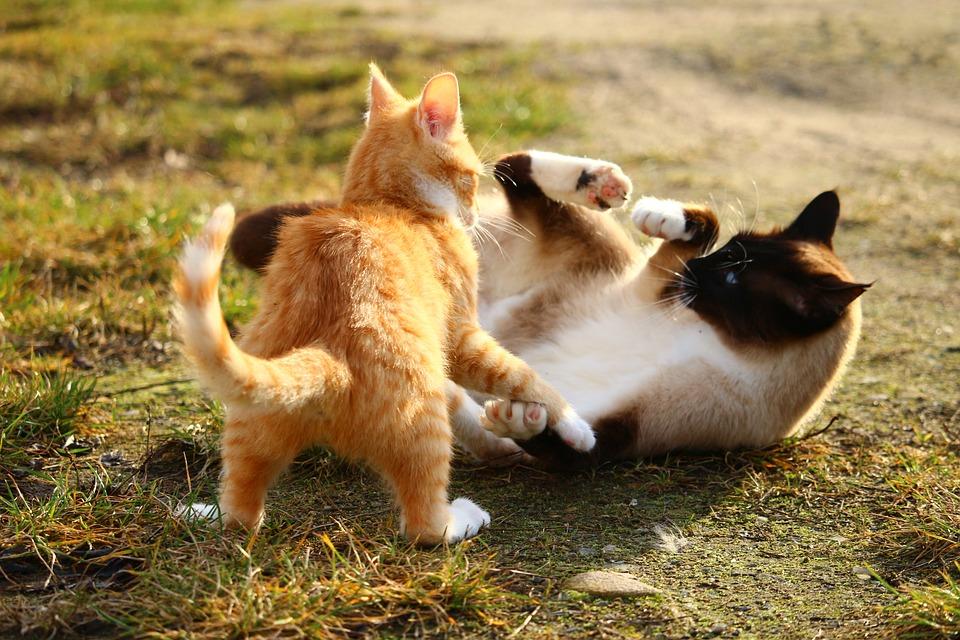 cat-1184736_960_720