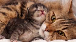 4 etapy života koček a jejich chování v závislosti na věku