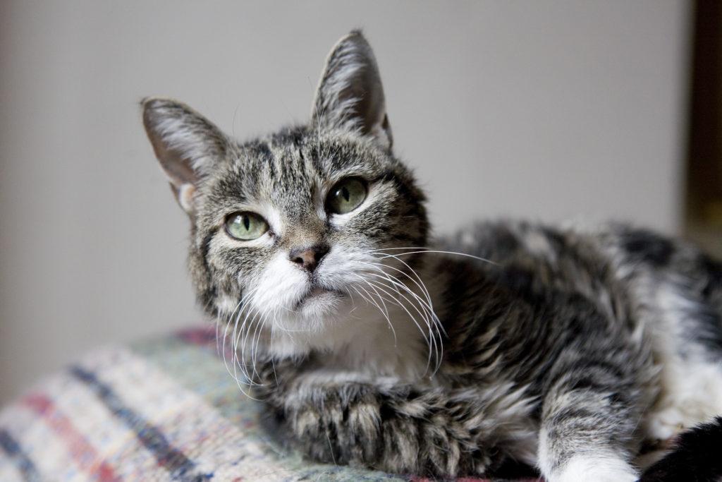 old-cat-1