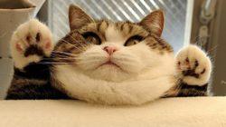 Obezita u koček a její řešení v 5 bodech