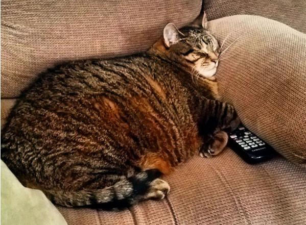 fat-cat-05.jpg uprava