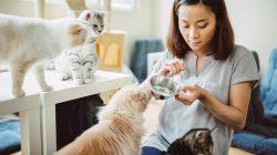 Kočičí chůvy to umí i s plachými kočkami