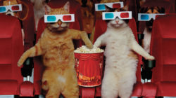 8 slavných filmů, které by vaše kočka natočila jinak