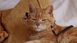 Jak pečovat o staré kočičky