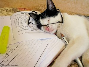 Zdroj: https://vivas.fi/17-syyta-miksi-kissat-ovat-parempia-kuin-koirat/