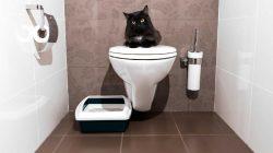 Proč neučit kočky na lidský záchod, pokud jim nechcete způsobit trauma