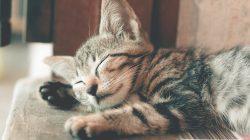 7 super produktů, kterými zlepšíte život domácí kočce
