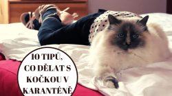 10 tipů, co dělat s kočkou v domácí karanténě