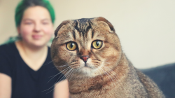 Jak umí kočka pomoci s konkrétními duševními nemocemi? Vědecky už je to dokázáno
