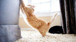 Škrábe vám kočka nábytek? Možná jen nemá správné škrabadlo